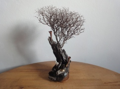 Driftwood VI